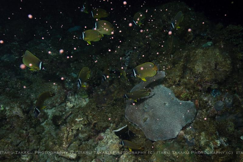 雷雨、、、。サンゴの産卵3日目_b0186442_22522039.jpg