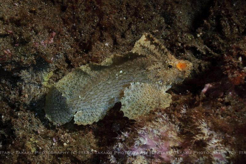 雷雨、、、。サンゴの産卵3日目_b0186442_22523899.jpg