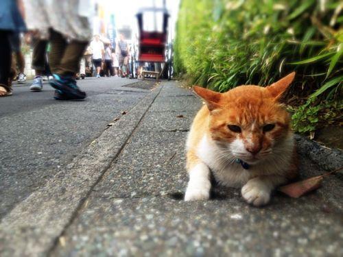 ◆鎌倉一人旅とりあえずスナップ②_b0008655_19522723.jpg