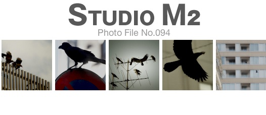 STUDIO M2 Photo File No.094「東京のカラス」_a0002672_2334052.jpg