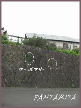 b0189003_17223797.jpg