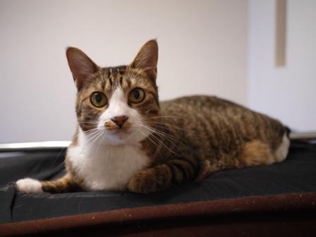 猫のお友だち じょあんちゃんはんくすちゃんあーるくん編。_a0143140_1644063.jpg