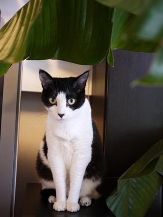 猫のお友だち じょあんちゃんはんくすちゃんあーるくん編。_a0143140_16463576.jpg