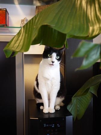 猫のお友だち じょあんちゃんはんくすちゃんあーるくん編。_a0143140_16473455.jpg