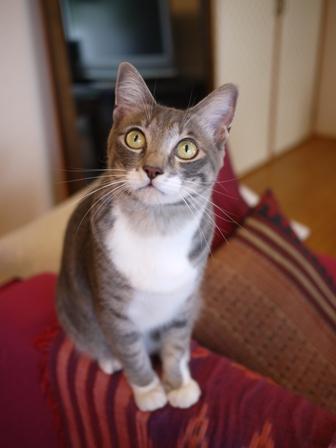 猫のお友だち じょあんちゃんはんくすちゃんあーるくん編。_a0143140_16511537.jpg