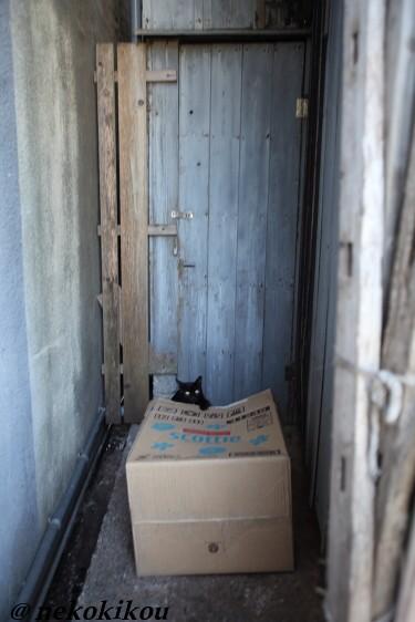 志摩の猫たち_b0138848_2105622.jpg