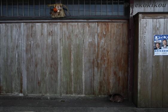 志摩の猫たち_b0138848_2111557.jpg