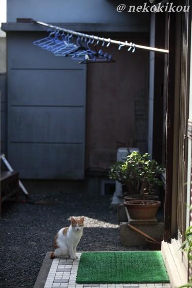 志摩の猫たち_b0138848_2112742.jpg
