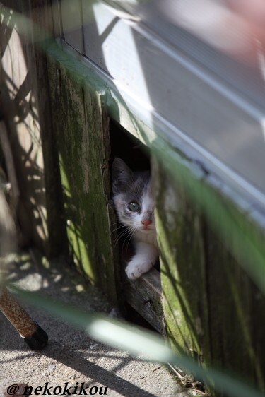 志摩の猫たち_b0138848_2114462.jpg