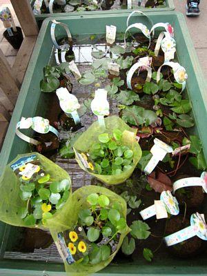涼しげです「水生植物」_c0141652_12444212.jpg