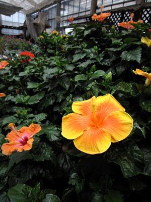 涼しげです「水生植物」_c0141652_12462727.jpg