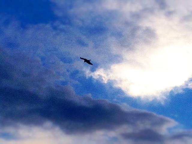 ◆鎌倉一人旅・終着は湘南の落陽を_b0008655_15381461.jpg