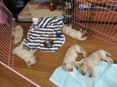 エラと7匹の赤ちゃん♪_a0077673_11135741.jpg