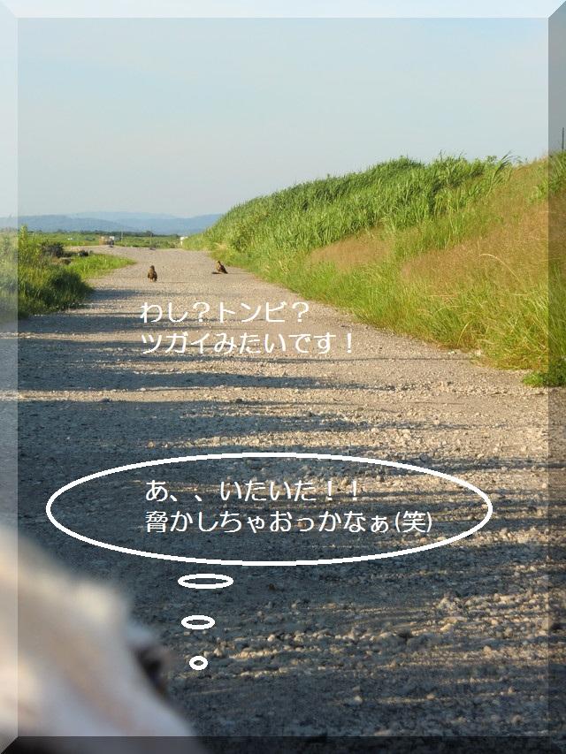 d0243802_2013977.jpg