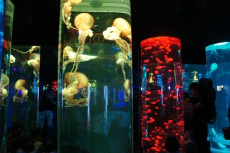能登島水族館、ちょっと紹介!_a0128408_18535065.jpg