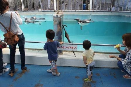 能登島水族館、ちょっと紹介!_a0128408_18551681.jpg
