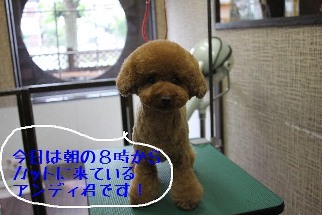 b0130018_13232040.jpg