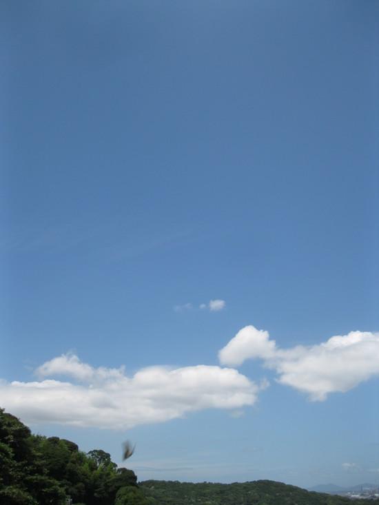 「夏の兆し」☆_a0125419_14393959.jpg