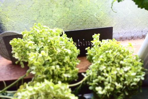 アルムさんのお庭にて_c0148232_10262180.jpg