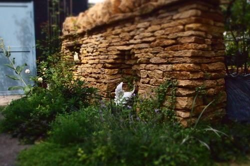 アルムさんのお庭にて_c0148232_945488.jpg