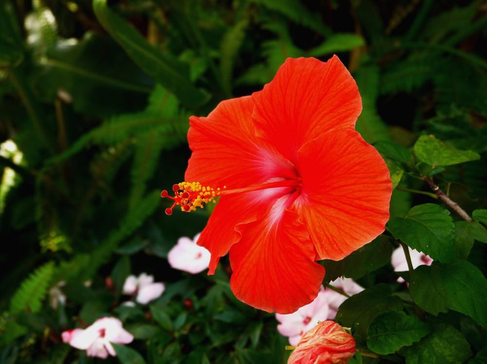 和歌山県植物公園緑花センター _b0093754_22343737.jpg