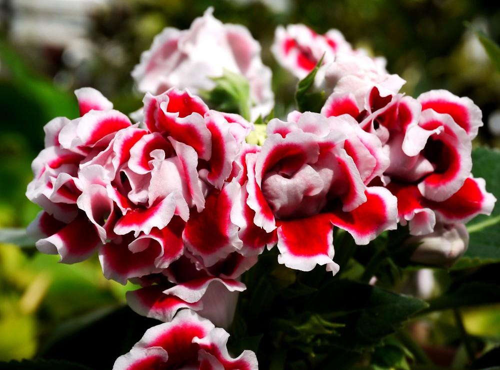和歌山県植物公園緑花センター _b0093754_22352384.jpg