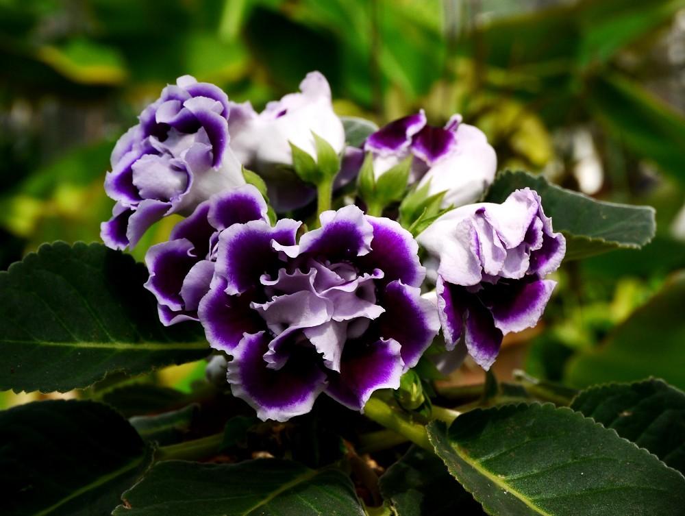 和歌山県植物公園緑花センター _b0093754_2235694.jpg