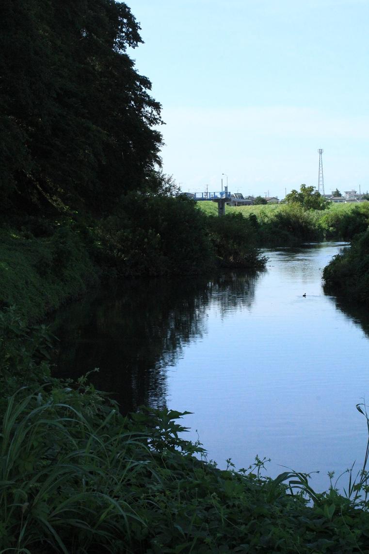 新河岸川の河原散歩    ~ハグロトンボ発見~_a0107574_6174095.jpg
