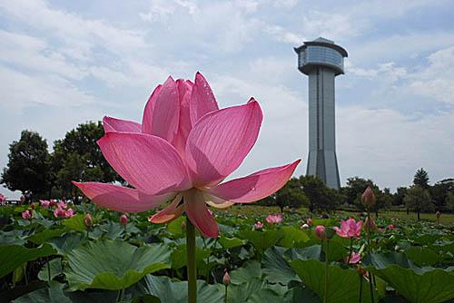 古代蓮会館展望タワーから_f0030085_17402389.jpg