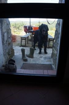 疑似体験「犬の居る暮らし」_f0106597_2315584.jpg