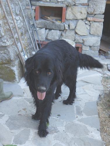 疑似体験「犬の居る暮らし」_f0106597_2361876.jpg