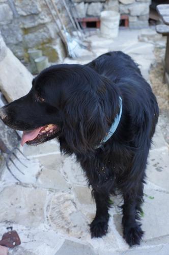 疑似体験「犬の居る暮らし」_f0106597_2364861.jpg