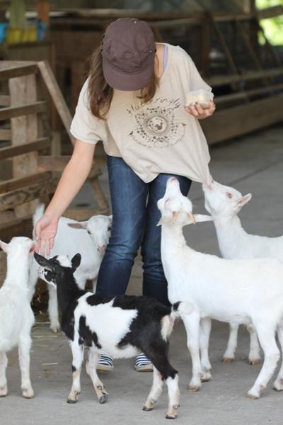 可愛いヤギに会いに*ルーラルカプリ農場*_d0128712_640982.jpg