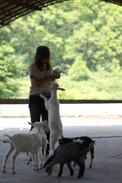 可愛いヤギに会いに*ルーラルカプリ農場*_d0128712_6523125.jpg