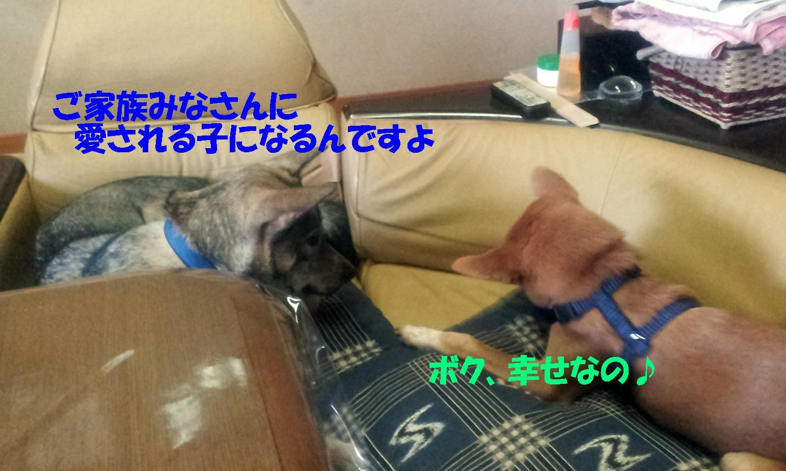 b0207320_1113267.jpg