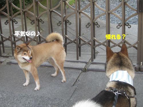 f0143123_20124526.jpg