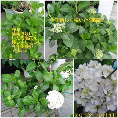 紫陽花の季節が終わり そして ふた七日がすぎました・・・・_a0084343_19293990.jpg