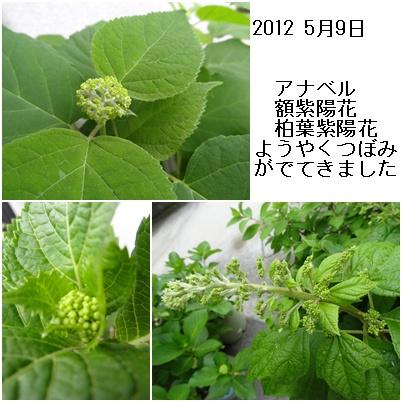 紫陽花の季節が終わり そして ふた七日がすぎました・・・・_a0084343_9282176.jpg
