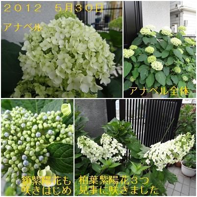 紫陽花の季節が終わり そして ふた七日がすぎました・・・・_a0084343_9381944.jpg