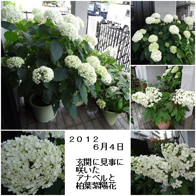 紫陽花の季節が終わり そして ふた七日がすぎました・・・・_a0084343_9383936.jpg