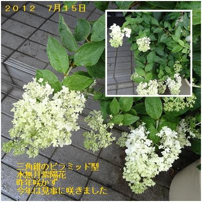紫陽花の季節が終わり そして ふた七日がすぎました・・・・_a0084343_940096.jpg