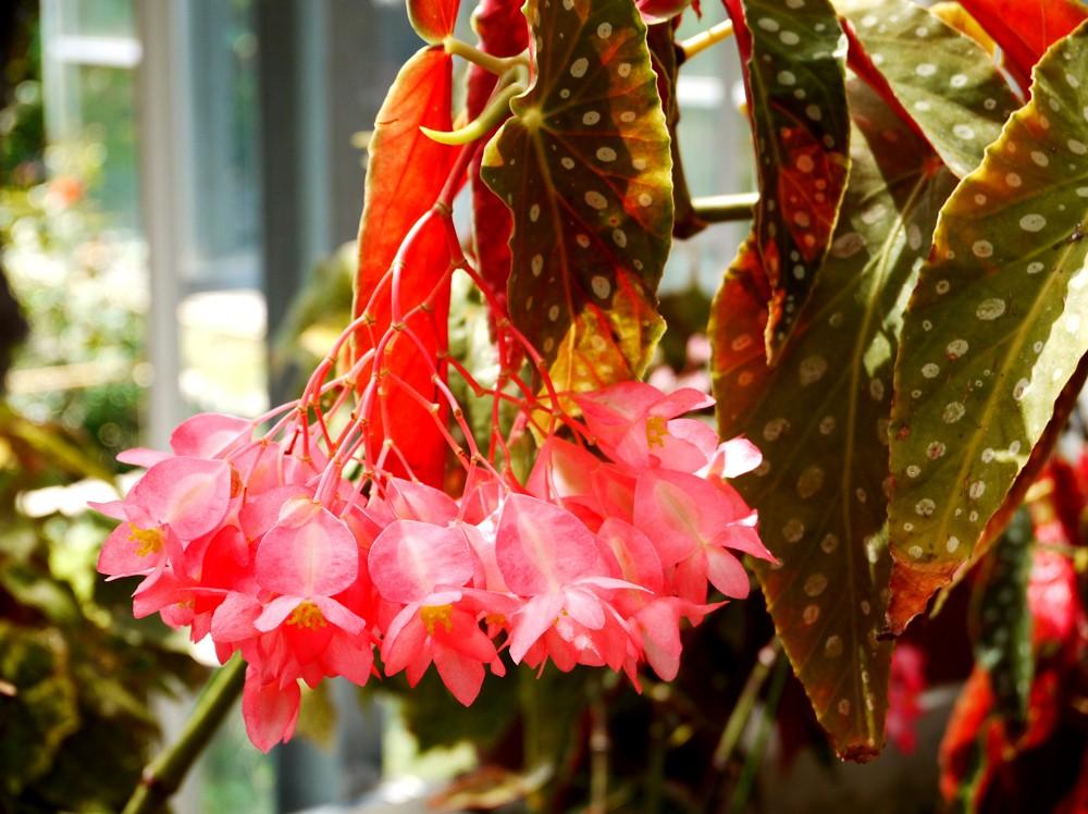 和歌山県植物公園緑花センター _b0093754_2243213.jpg