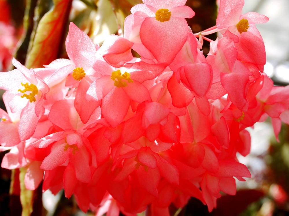 和歌山県植物公園緑花センター _b0093754_22433468.jpg