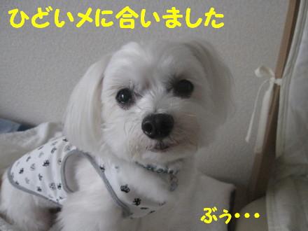 b0193480_1733372.jpg