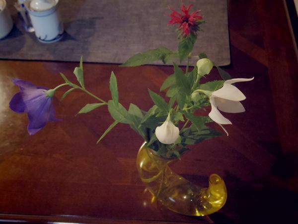 桔梗の花_f0017696_6183244.jpg