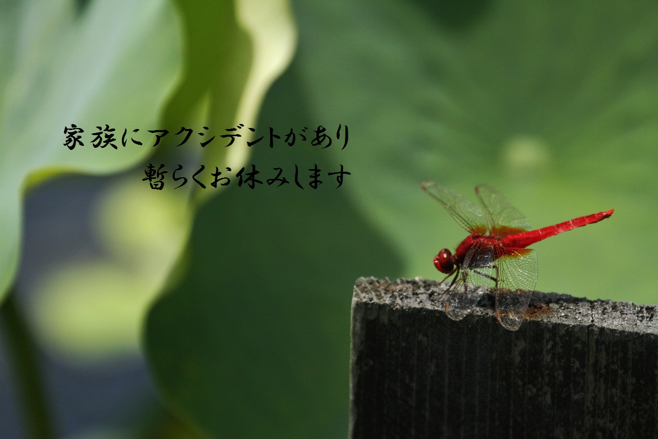 a0140000_22105517.jpg