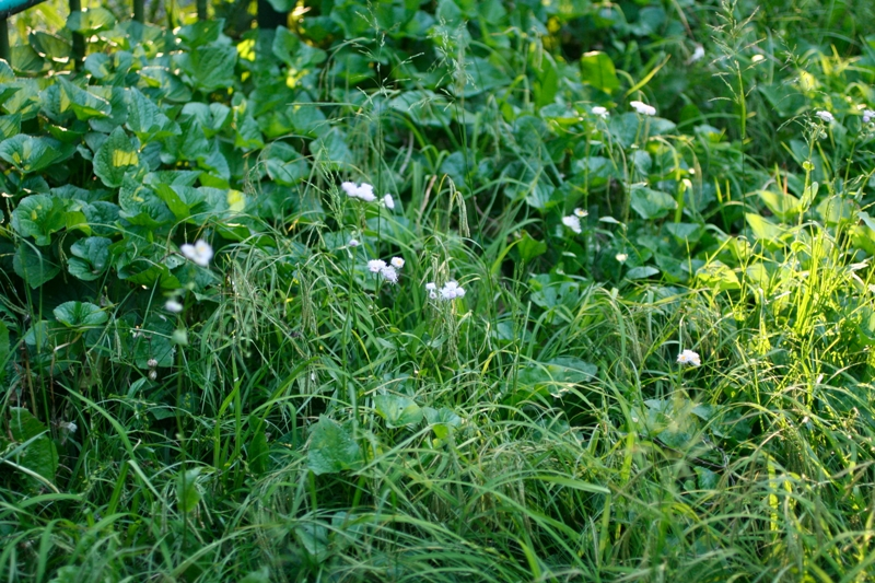 夏には白い花_f0091207_045799.jpg