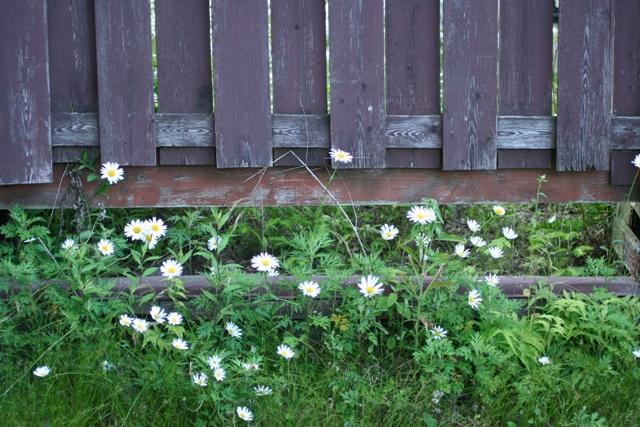 夏には白い花_f0091207_047188.jpg