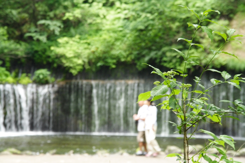 白糸の滝の植物たち_f0091207_22151566.jpg