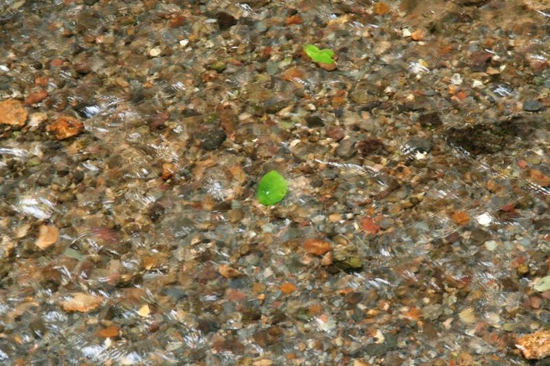 白糸の滝の植物たち_f0091207_22165261.jpg